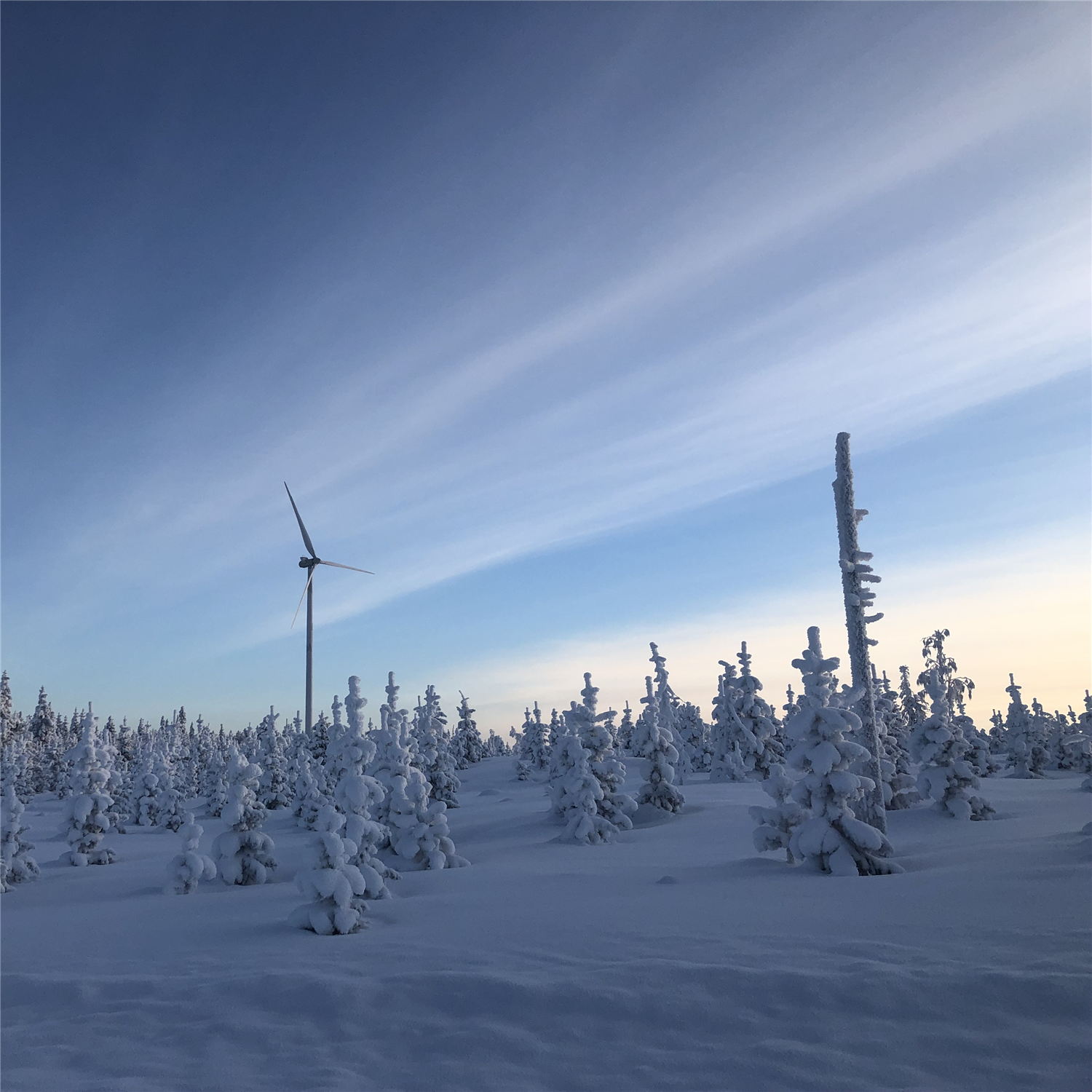 Winter wind turbine